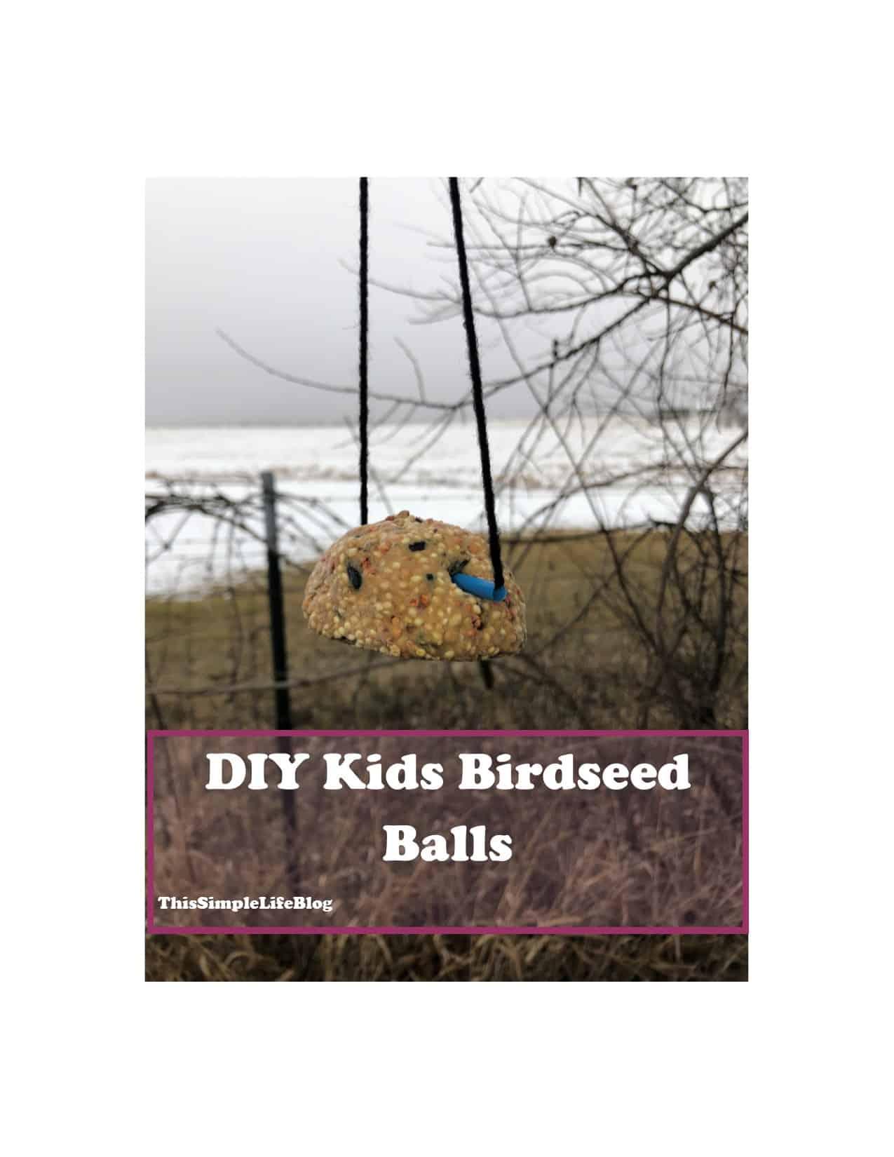 DIY Peanut Butter Bird Snack Balls