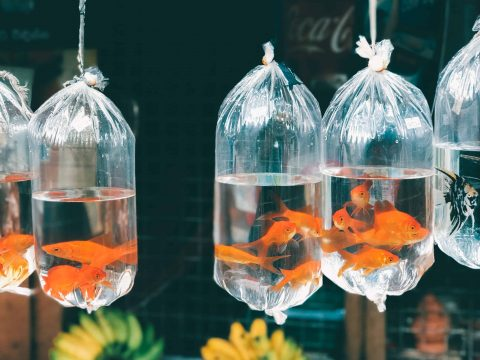 What a GIANT Goldfish Taught Me About Life